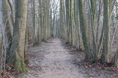 forest track in the winter Stock Image