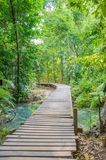 Way in forest. Royalty Free Stock Photography