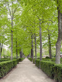 Way in the gardens of Aranjuez. Vertically, with trees on either side Stock Photo