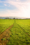 Way through a grass field leading to a lake Stock Photos