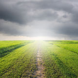 Way of Grass Grass fields and rainclouds Stock Photo