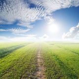 Way of Grass Grass fields and sun sky Stock Images