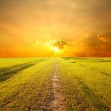 Way of Grass Grass fields and sunset Stock Photos