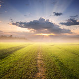 Way of Grass Grass fields and Sunset. on the way Stock Photo