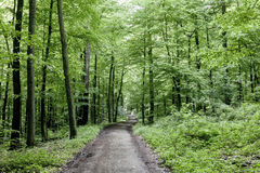 Way through the green forest Stock Photography
