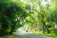 The way with green tree in India Royalty Free Stock Photography