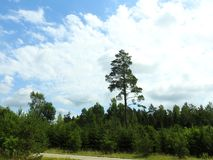 Road, green trees and beautiful cloudy sky, Lithuania Stock Photography