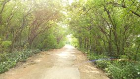 A way home with curved trees. Natural sight of curved trees on the side of brown roads in a sunny day. You can look a little rainbow on the right corner of the Stock Image