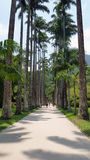 Way of the imperial palm trees. At botanical garden Stock Photo