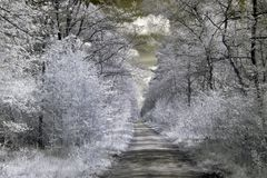 Way in infrared Royalty Free Stock Image