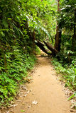 Way in jungle Stock Image