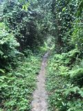 Way in jungle forest royalty free stock photos