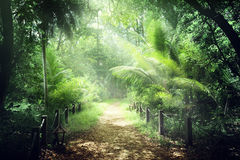 way in jungle of Seychelles stock images