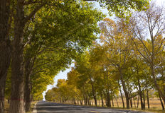 Way. In late autumn, across the prairie road, roadside neat trees Stock Image