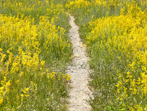 Way through meadow. With beautiful wild flowers Stock Photography