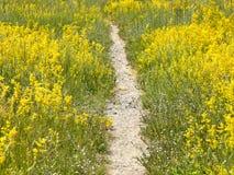 Way through meadow Stock Photography
