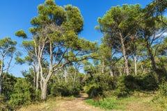 Way in a Mediterranean forest in Costa Brava, Catalonia, Spain. Dirt road in a Mediterranean forest in Costa Brava, Catalonia, Spain Stock Images
