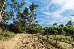 Way in a Mediterranean forest in Costa Brava, Catalonia, Spain. Dirt road in a Mediterranean forest in Palamos, Costa Brava, Catalonia, Spain Stock Photo