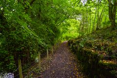Way in middle of forest around Loch Awe, in Scotland stock photos