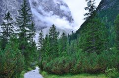 Way into the mountain. A lonely dirt road penetrates into the forest to bring the mountain Royalty Free Stock Photo