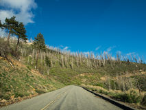 Way on mountain of sequoia national forest Stock Image