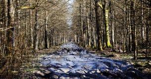 Way and mud to hunting lodge. Forest of Turopolje. Croatia royalty free stock photo