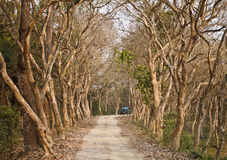 Safari route. The way in nationalpark for travel India Stock Images