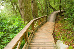 The way into nature Royalty Free Stock Photography