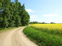 Beautiful simple road and green trees, Lithuania Stock Photo