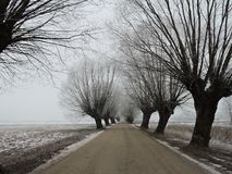 Road and snowy trees, Lithuania Royalty Free Stock Photo