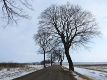 Way and old trees in winter, Lithuania royalty free stock photos