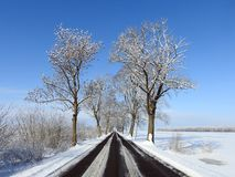 Way and old trees in winter, Lithuania Stock Images
