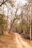 A way through Pench tiger reserve forest Stock Images