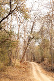 A way through Pench tiger reserve forest Royalty Free Stock Photography