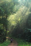 Sun light in the forest royalty free stock images