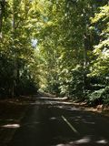 A way with plane-trees. A way with beautiful, big plane-trees royalty free stock images