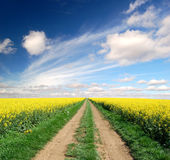 Way in rape field Stock Photography