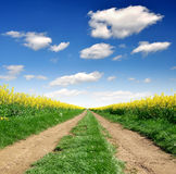 Way in rape field Royalty Free Stock Photography