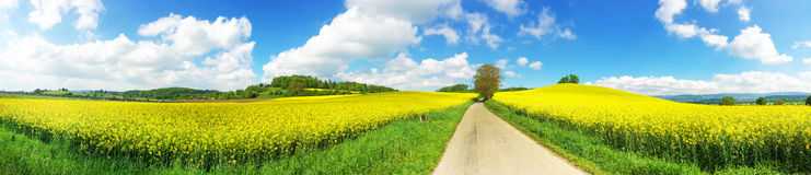 Way in the rape field. Panoramic photo of a rape field with nature way in the near of lake Bodensee Stock Images