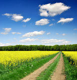 Way in rapeseed field. In Czech Republic Royalty Free Stock Images