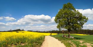 Way between rapeseed field and lime tree Royalty Free Stock Photography