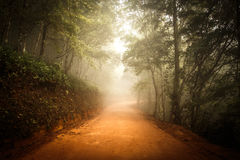 Way. The road in the forest Royalty Free Stock Photos