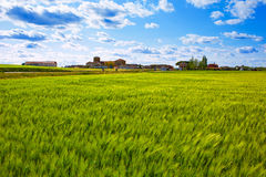 The Way of Saint James in Palencia cereal fields Stock Image