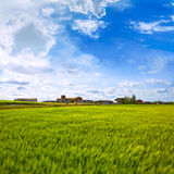 The Way of Saint James in Palencia cereal fields Royalty Free Stock Photography