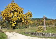 Way side cross and pear tree in autumn royalty free stock photo