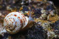 Way of the Snail Royalty Free Stock Photos
