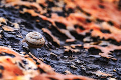 Way of the Snail Stock Photo