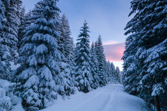 Way through snowy forest at dawn Stock Photo