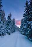 Way through snowy forest at dawn Royalty Free Stock Photography