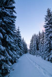 Way through snowy forest at dawn Stock Image
